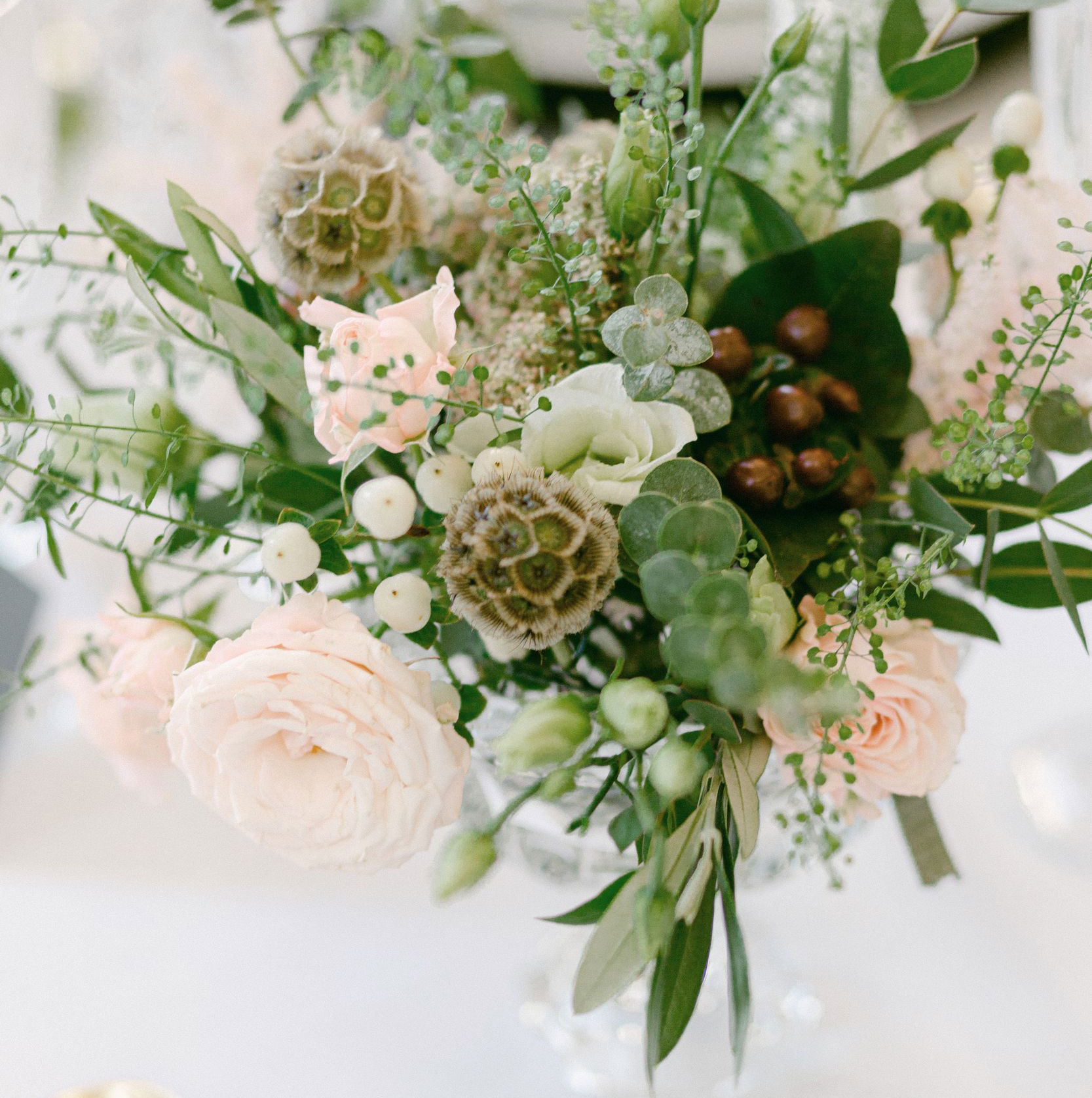 light pink roses complimented by green leaves