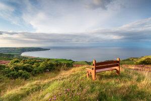 A bench overlooking nature - Wedding planner surrey